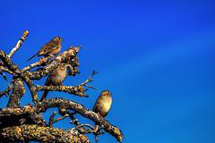 (Abel AP) Tags: birds sky wildlife nature sunolregionalwilderness alamedacounty california usa northerncalifornia ebparksok eastbayregionalparkdistrict outdoor abelalcantarphotography twop