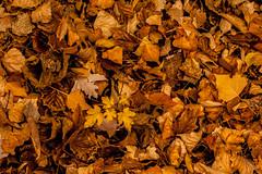 Colores de Otoño (3) (Soleil Belice) Tags: otoño murcia parque hojas ardilla