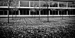 (Nico_1962) Tags: trees building windows ramen bomen gras grass gebouw leica leitz summaron rangefinder meetzoeker nederland zwolle bw zwartwit blackandwhite leicam manualfocus thenetherlands