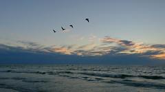 """The bad news is time flies. The good news is you're the pilot.""   ― Michael Altshuler (Mircea D. Tagui) Tags: gulfofmexico sea beach birds sunset siestakeyflorida fujinonxf16mmf14 fujifilmxt2"