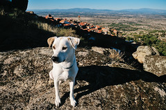 Ice the Dog in Monsanto, Portugal (Gail at Large | Image Legacy) Tags: 2017 icethedog monsanto portugal gailatlargecom