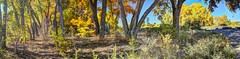 Edge of the bosque (JoelDeluxe) Tags: tingley beach abq bosque albuquerque dukecity nm newmexico biopark ponds fall colors red orange yellow green blue ducks wildlife fishing recreation landscape panorama hdr joeldeluxe