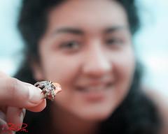 RomanLens-Exploring (RoManLeNs) Tags: naturaleza nature crab beach smallanimals animals traveling perspective closeup crustaceans crawler hermitcrab romrom rom romanlens