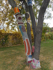 (navejo) Tags: montreal quebec canada tree park yarnbombing knitting