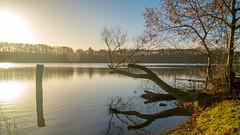 SAM_6879 (Nic Ky) Tags: see brandenburg fleckenzechlin herbst novembermood idylle idyllisch ruhe kraft entspannung stille blätter wald landschaft natur landscape nature naturelove lake lakeside seeblick blau wolken sonne spiegelung