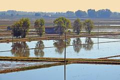 Delta del Ebro.2 (Luis Mª) Tags: tarragona deltadelebro