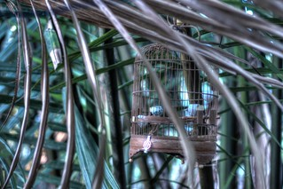 The Lonely Birdcage