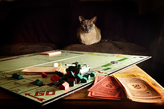 Discussing terms of surrender (Apionid) Tags: monopoly tank cheating moriarty cat chat katze gato tonkinese werehere hereios nikond7000 littledoglaughedstories centurion
