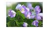 Wilde Blumen (rafischatz... www.rafischatz-photography.de) Tags: clover deepinthewoods