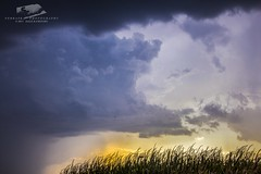 091517 - 2nd to Last Storm of the 2017 Season (NebraskaSC Photography) Tags: nebraskasc dalekaminski nebraskascpixelscom wwwfacebookcomnebraskasc stormscape cloudscape landscape nebraska weather nature awesomenature storm clouds cloudsday cloudsofstorms cloudwatching stormcloud daysky weatherphotography photography photographic weatherspotter chase chasers newx wx weatherphotos weatherphoto day sky magicsky darksky darkskies darkclouds stormyday stormchasing stormchasers stormchase skywarn skytheme skychasers stormpics southcentralnebraska orage tormenta light vivid watching dramatic outdoor cloud colour amazing beautiful stormviewlive svl svlwx svlmedia svlmediawx