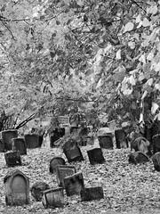 """""""Heiliger Sand"""" (four-hearts) Tags: judenfriedhof jüdischerfriedhof friedhof blätter laub pflanzen herbst bäume schwarzweis heiligersand worms wo rheinhessen rheinlandpfalz grabsteine gräber ruhestätte"""