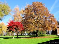 Automne au bord du lac de Neuchâtel (jean-daniel david) Tags: automne arbre verdure pelouse bleu rouge nature ciel parc yverdonlesbains vaud suisse suisseromande