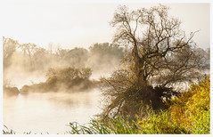 Brume et soleil (Pascale_seg) Tags: paysage landscape river riverscape earth nature arbres tree mist misty brume aube matin morning early tôt moselle lorraine france nikon automne autumn