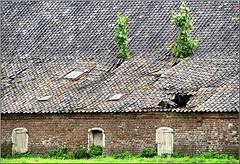 Abandoned stables of castle farm de Holtmühle !! (jac hendrix) Tags: verlaten stallen kasteelboerderij holtmühle kasteel tegelen limburg nederland verval bomen varkensstallen