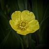 Tiny Marvel (MrBlueSky*) Tags: flower petal garden horticulture nature outdoor colour kewgardens royalbotanicgardens london aficionados pentax pentaxart pentaxlife pentaxk1 pentaxawards pentaxflickraward