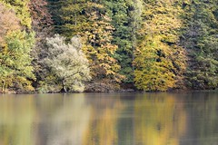 Autumncolours and reflection (aj.lindeboom) Tags:
