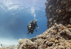 quadruple amputee man takes diving course 34 (KnyazevDA) Tags: disability disabled diver diving deptherapy undersea padi underwater owd redsea buddy handicapped aowd egypt sea wheelchair travel amputee paraplegia paraplegic