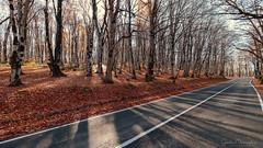 Road (Gocha Nemsadze) Tags: road fall autumn colors gochanemsadze canoneos80d canonefs1018mmf4556isstm