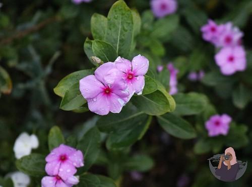 Flowers at Haldoor Hotel