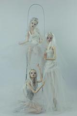 . (dolls of milena) Tags: bjd resin doll popovy sisters landy rat dolls magpie peewit portrait