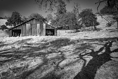 (Leaning Ladder Photography) Tags: california amadorcounty amador barns blackandwhite bw trees shadows light autumn canon 7d leaningladder