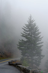 Tree-at-the-Bend (Geoff Sills) Tags: blue ridge parkway smoky mountains national park nikon 85mm 14g d700