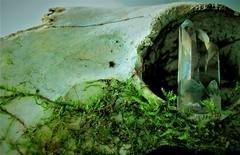 A glint in his eye... (matt.wayne075) Tags: stone rhyming zone macro mondays stonerhymingzone macromondays
