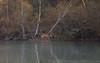 Deer // Cerf Elaphe (Wait & Shoot (Alexandre Bès)) Tags: foret animaux elaphe cerf photo wildlife strasbourg rhodes brâme extérieur animal bordure profondeur de champ deer horn forest brown portrait white pelouse paysage ciel mammifère doe biche