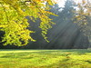 awesome autumn 4 (Mattijsje) Tags: herfst awsome autumn trees tree leafs leaves bladeren bomen boom licht lichtspel light sunbeams sun zon zonlicht zonnestralen zonnestraal solar beams green season field grass grasveld lights shadows schaduwen loofbomen