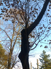 Fotografie54422po (chicore2011) Tags: littlepark trees