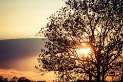 Silhouette in Gold (NathalieSt) Tags: camargue coucherdesoleil europe fz1000 france gard languedocroussillon legrauduroi lumix lumixfz1000 panasonic sunset languedocroussillonmidipyrén languedocroussillonmidipyrénées fr