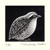 Japanese quail (Japanese Flower and Bird Art) Tags: bird quail coturnix japonica phasianidae toshio suda modern intaglio print japan japanese art readercollection