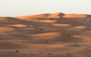 sahara sunrise 1