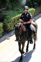 Miami Beach Police (Rick & Bart) Tags: florida miami miamibeach usa rickvink rickbart canon eos70d city urban everydaypeople people guy man male police horse miamipd