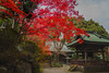 極楽寺, Gokurakuji-Temple (aotaro) Tags: ilce7m2 automn gokuraji monk redleaves kanagawa fe1635mmf4zaoss coloredleaves yokohama japan temple sony gokurakujitemple fall orangeleaves monkfigure