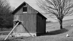 Down on the Farm...B&W edit (R.A. Killmer) Tags: blackandwhite monochrome farm coup chicken shadow light shade wooden rustic rural 2017 pennsylvania
