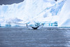 Whale Watching - Touch Down (*Capture the Moment*) Tags: 2017 elemente flosse fluke growler ice iceberg ilulissat möwe seagull sonye18200mmoss sonynex7 wasser water whale