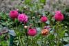DSC_3207 (facebook.com/DorotaOstrowskaFoto) Tags: ogródbotaniczny kwiaty