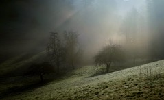 Diffuse (BphotoR) Tags: bphotor march diffuse light mood licht stimmung landscape forest grass fog hazy