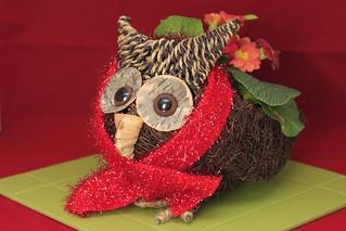 Christmas Primrose Owl (48/52)