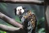 IMG_1691 (neatnessdotcom) Tags: prospect park zoo brooklyn new york city tamron 18270mm f3563 di ii vc pzd canon eos rebel t2i 550d