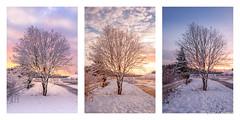 During a day (Joni Salama) Tags: friisinmäki maa luonto kasvit auringonnousu talvi valo auringonlasku espoo suomi puu uusimaa finland fi nature sunrise sunset light