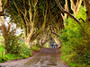 The Dark Hedges (annewilson12) Tags: ireland game thrones dark hedges travel trees