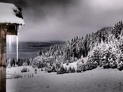 Foresta Artica (Fernando De March) Tags: cansiglio freddo foresta artico microclima inversione termica