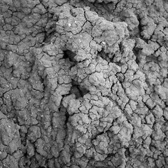 DSCF0730 (rjosef) Tags: borrego desert