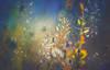 Grassleaf pepperweed - painting bokeh (Dhina A) Tags: sony a7rii ilce7rm2 a7r2 tamron sp 500mm f8 tamronsp500mmf8 prime ad2 adaptall2 mirrorlens 55bb catadioptric reflex cf tele macro lepidium graminifolium grassleaf pepperweed peppergrass pepperwort painting bokeh
