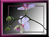 Orchid, a different point of view (Koko Nut, it's all about the frame) Tags: orchid white pink green geometric frame flower framedflower gradient tropical delicate detail koko kokonut wonder