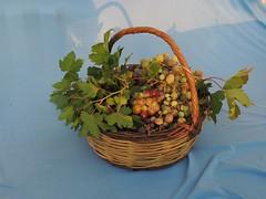 'One from the vine' (freshly picked grapes, Çeşme, Turkey) (Steve Hobson) Tags: fruit grapes vine leaves basket çeşme turkey