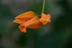 JJN_2113 (James J. Novotny) Tags: nikon d750 flowers flower garden gardens botanical macro chicago