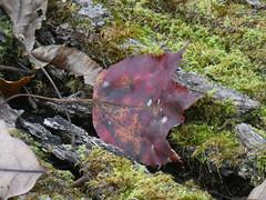 Clear Creek 2017 (tlucal) Tags: metropark clearcreek fallcolor trails nature fz80 fall